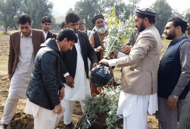 I buoni frutti della cooperazione internazionale Boom olivicoltura in Pakistan grazie all'Italia